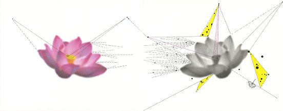 Shen Wei ©, Untiteld (Two Lotuses), 2014, Ink on Archival Inkjetprint, Diptych, each panel 11 x 14 inches